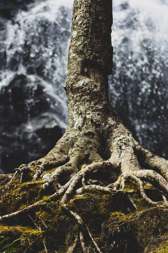 »Wie ein Baum, gepflanzt an den Bächen voll Wasser« - Resilienz-Training für den Pfarrdienst