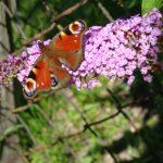 Der Weisheit grüner Mantel -  Sieben meditative Frühjahrsimpulse