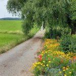 Der Weg des Herzens - Ein Meditationskurs zur inneren Balance