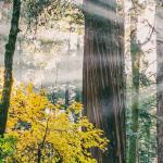 Integrale Spiritualität – Einübung in eine neue spirituelle Intelligenz