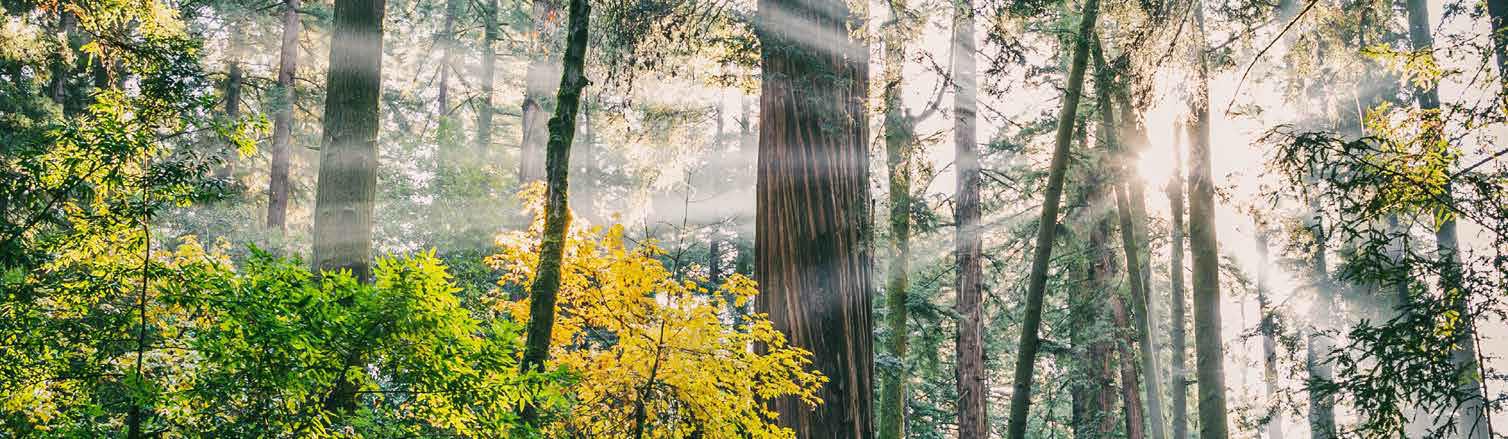 Integrale Spiritualität - Einübung in eine neue spirituelle Intelligenz.
